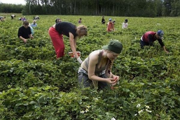 Сезонная работа в Финляндии