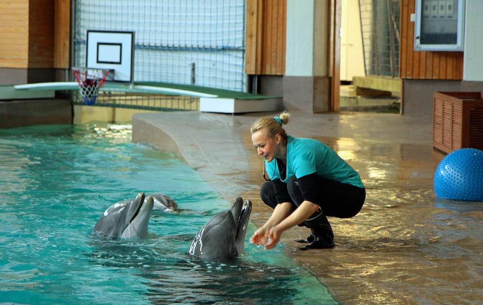 Дельфинарий в Тампере